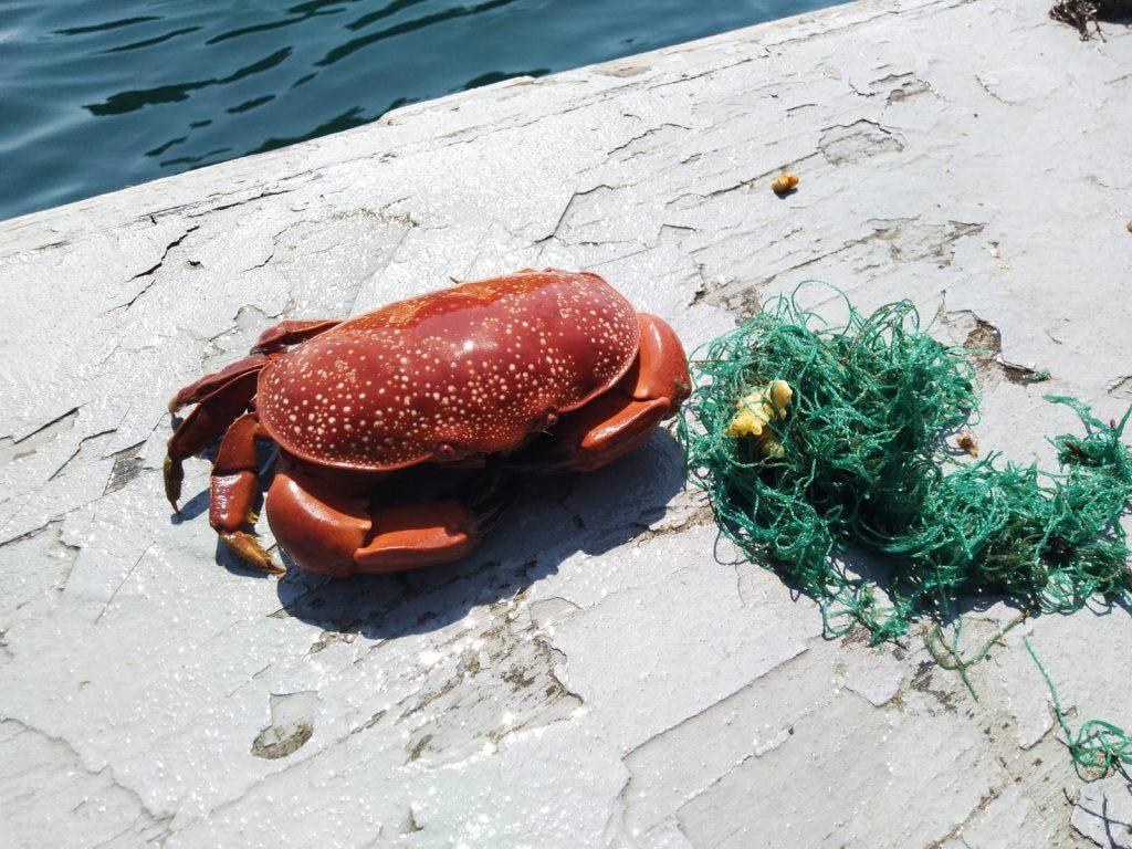 Marine Life Rescue