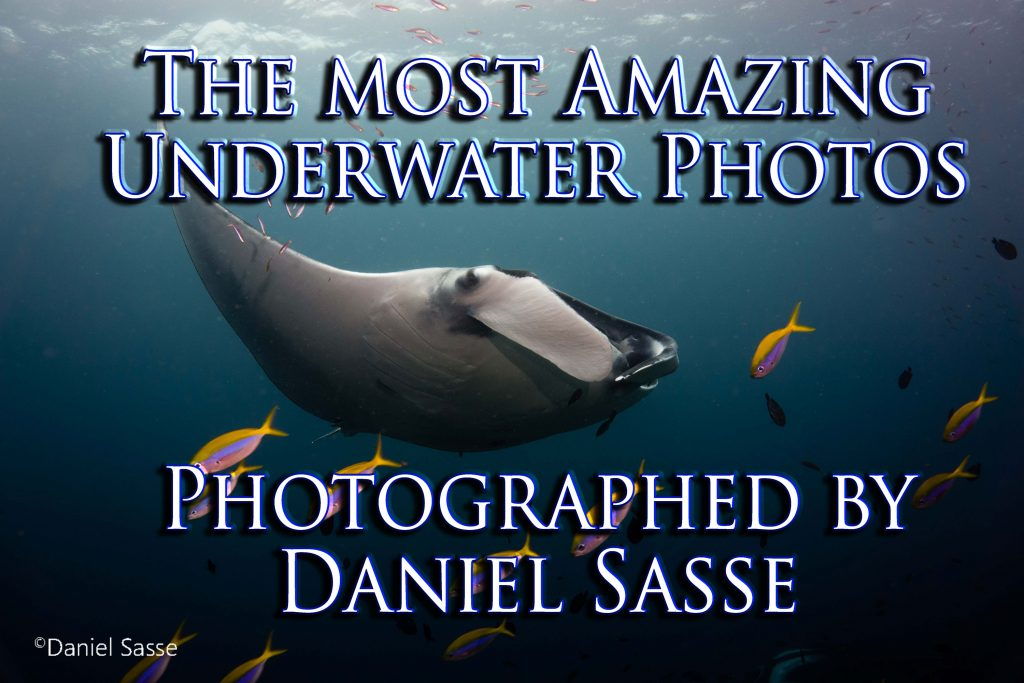 Multi award winning underwater photographer Daniel Sasse